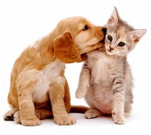 amizade entre cachorro e gato