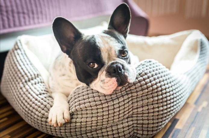 Cachorro sente frio também  Saiba como Proteger seu Animal do Inverno! 1dfd0601cec