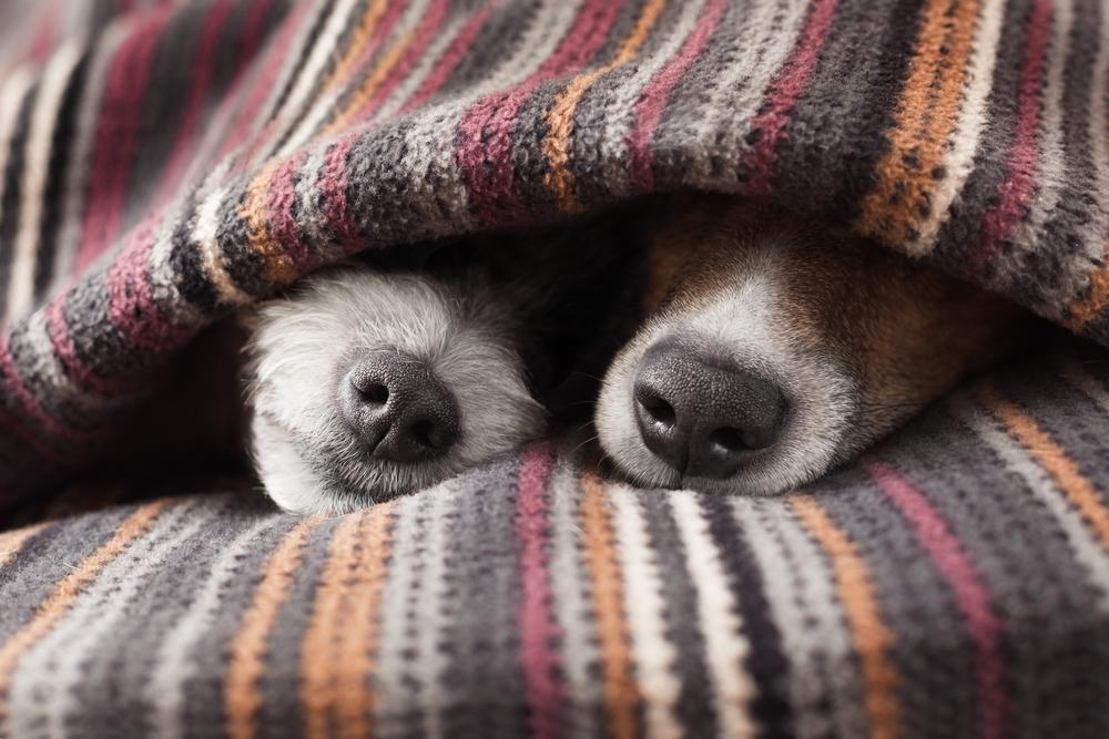 Doenças de inverno: Elas atingem os cachorros?