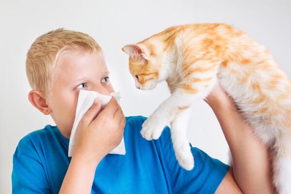 garoto segurando um gato com uma mão