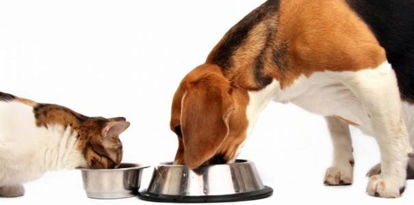 Cachorro e gato comendo em vasilhas de metal