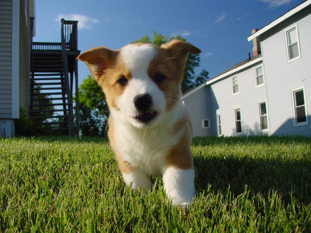 Seu pet é desobediente? Separamos as melhores dicas para educar cachorro!