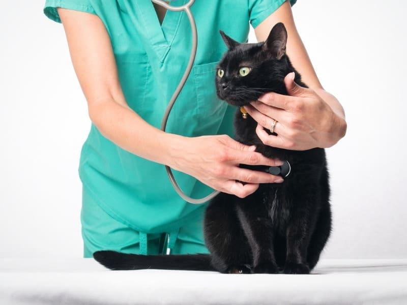 Médica veterinária escutando batimentos de gato preto com aparelho especializado.